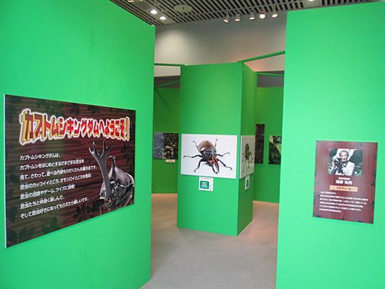昆虫写真展示