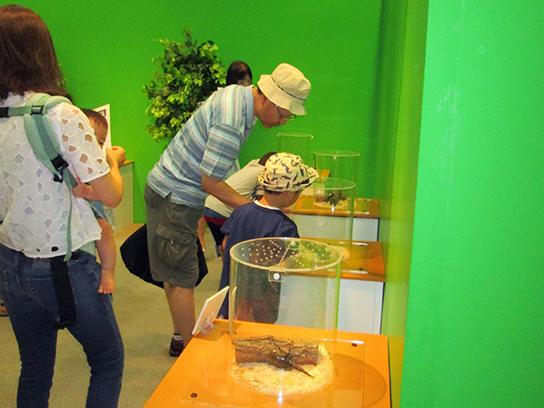 カブトムシ生態展示